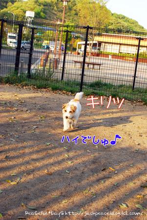 130417_dogrun8.jpg