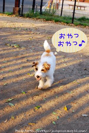 130417_dogrun9.jpg