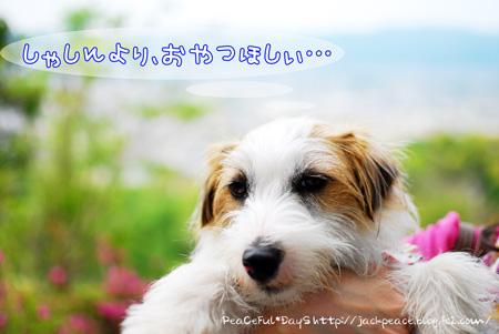 130504_peace13.jpg