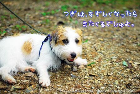 130523_kameike19.jpg