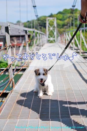 130523_kameike3.jpg