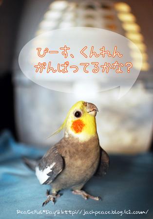 130531_choco2.jpg