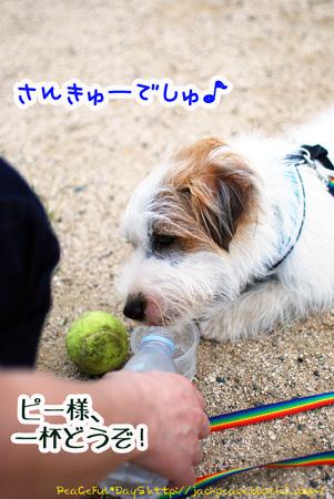 130606_nishi8.jpg