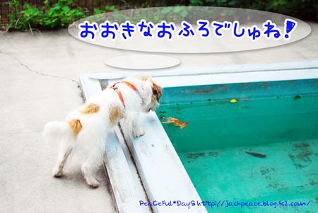 130619_yuasa.jpg
