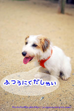 130619_yuasa20.jpg