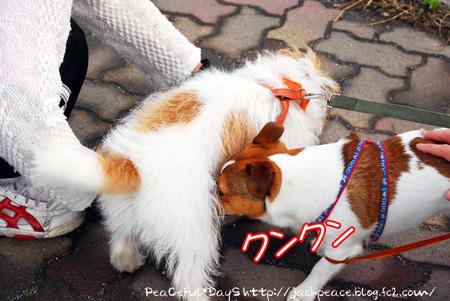 130627_kinokawa11.jpg