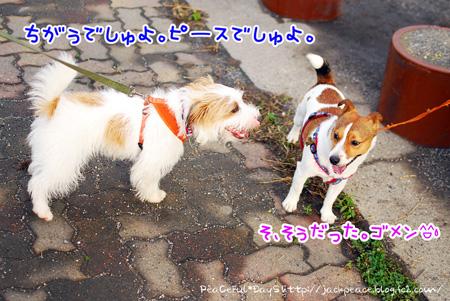 130627_kinokawa14.jpg