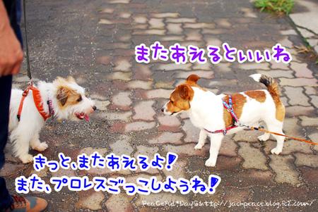130627_kinokawa19.jpg