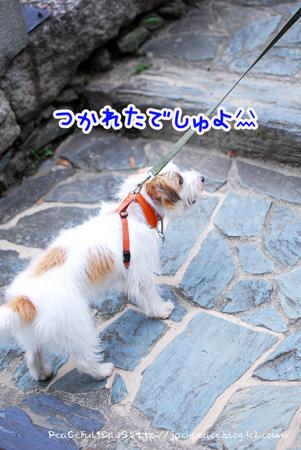 130627_oshiro5.jpg