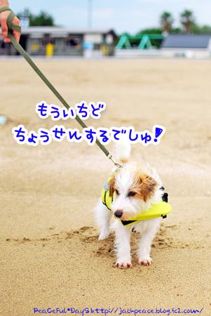 130704_umi1.jpg