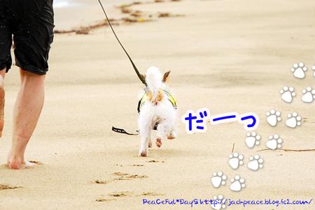 130704_umi9.jpg