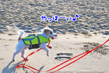 130805_umi2.jpg