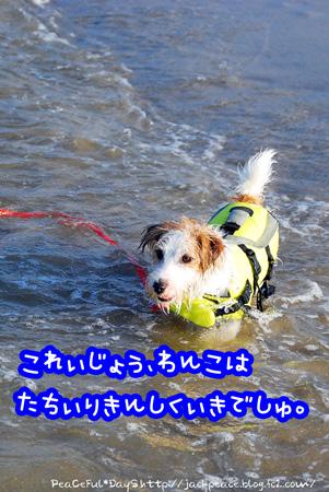130805_umi5.jpg