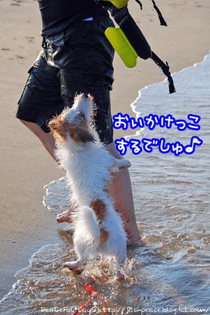 130805_umi6.jpg