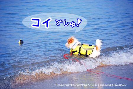 130811_umi2.jpg