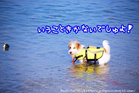 130811_umi3.jpg