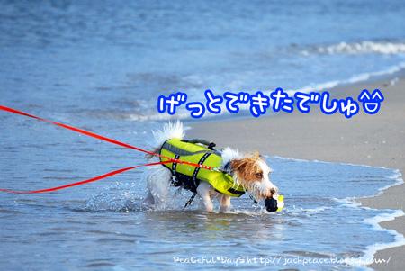130811_umi4.jpg