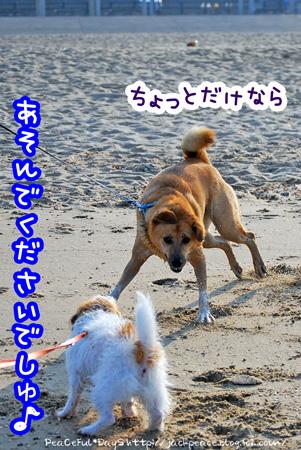 130811_umi7.jpg