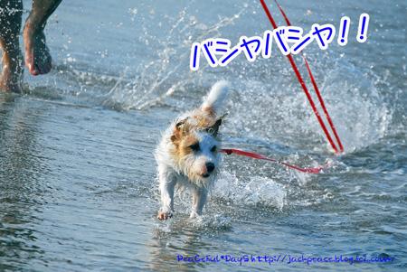 130817_kataonami12.jpg