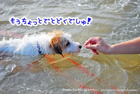 130817_kataonami15.jpg