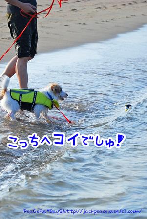 130817_kataonami2.jpg