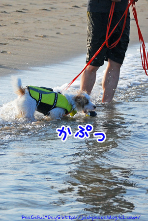 130817_kataonami3.jpg
