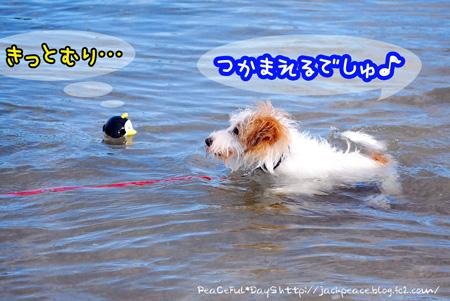 130821_umi12.jpg