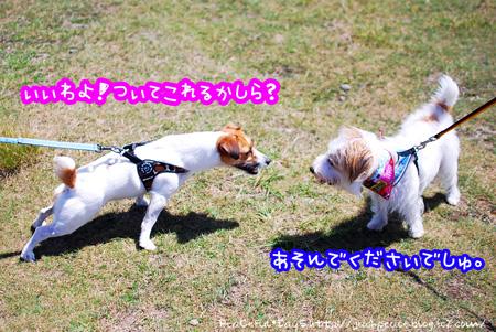 130827_biwako11.jpg
