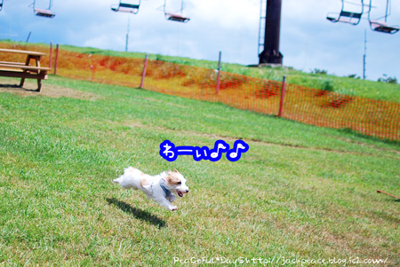 130827_biwako5.jpg