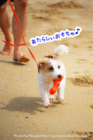 130903_umi2.jpg