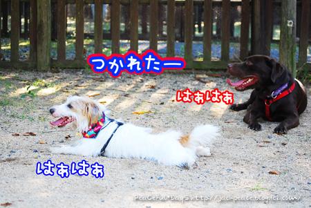 130921_yuasa17.jpg