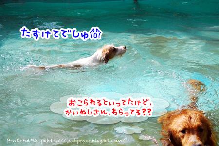 130926_yuasa16_edited-1.jpg