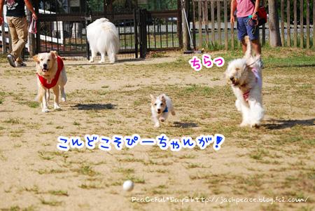131014_yuasa9.jpg