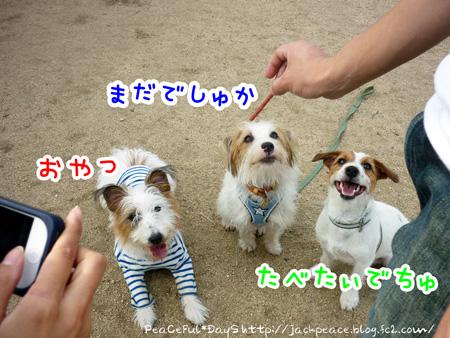 131109_kinokawa10.jpg