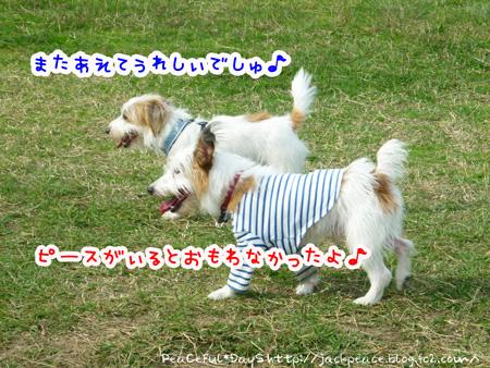 131109_kinokawa3.jpg