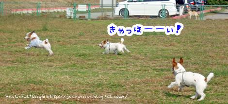 131109_kinokawa5.jpg