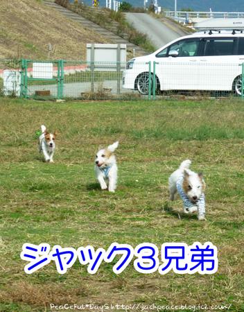 131109_kinokawa6.jpg