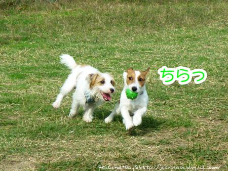 131109_kinokawa7.jpg
