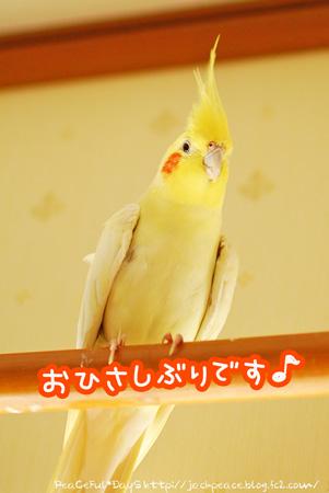 1DSC_koume.jpg