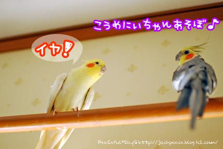 1DSC_okame.jpg