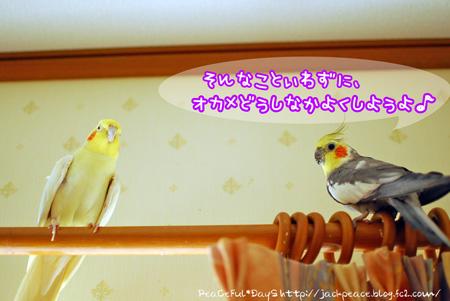 1DSC_okame2.jpg