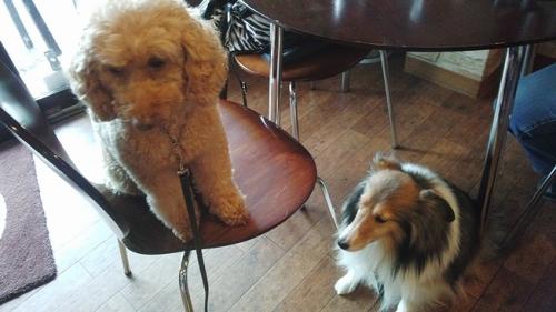 犬もOKのカフェ