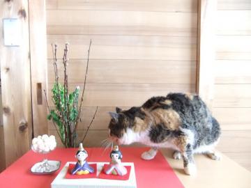 ミケ子とひな祭り
