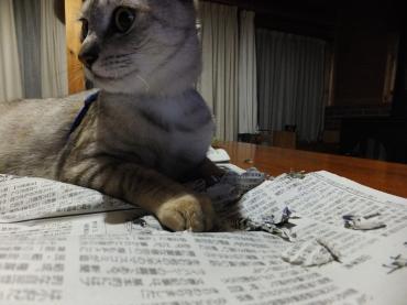ビリビリの新聞