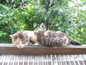 2011 7 13 待ってるミケ子