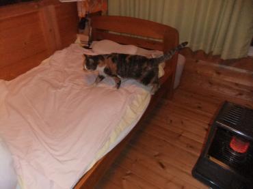 2012 2 16 ミケ子家猫に