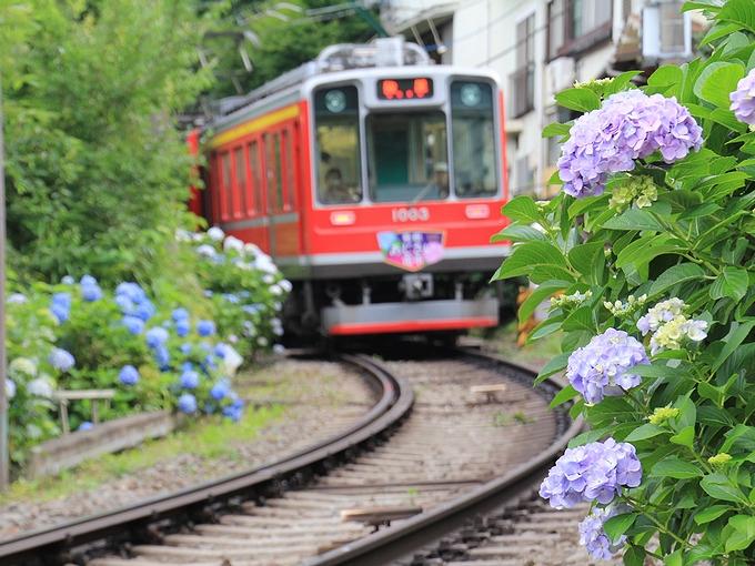 大平台踏切 箱根登山電車と紫陽花