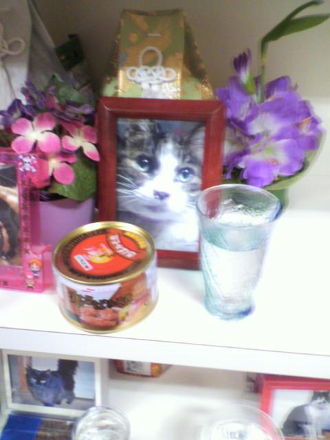 昨年の4月22日は愛猫の紋次郎くんが逝った日でした…