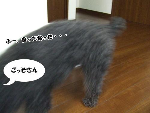 20130301222853c38.jpg