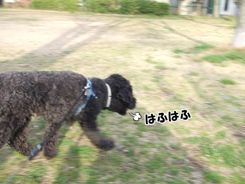 201303262256446c7.jpg